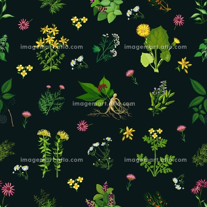 Medicinal Herbs Seamless Pattern. Seamless color pattern with dark background depicting different medicinal herbs vector illustrationの販売画像