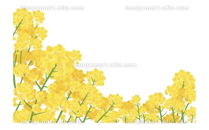 イラスト素材 菜の花 なのはな ナノハナ 花畑 横構図 ベクターの販売画像