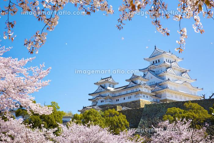 桜吹雪の姫路城の販売画像