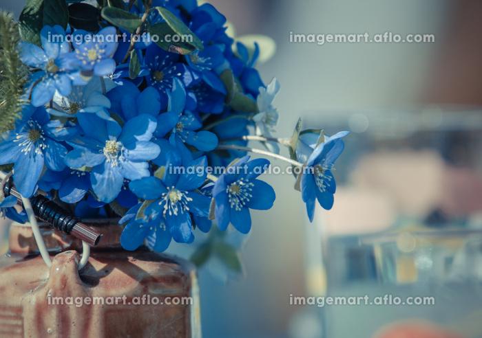 花 植物 咲くの販売画像