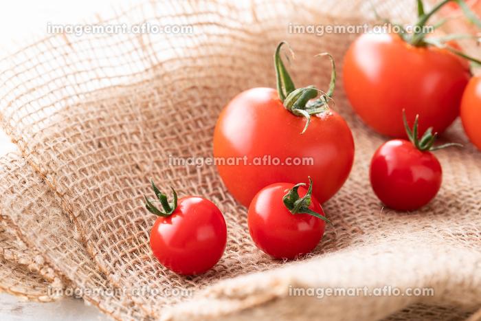新鮮朝採り、房摘みトマトの販売画像