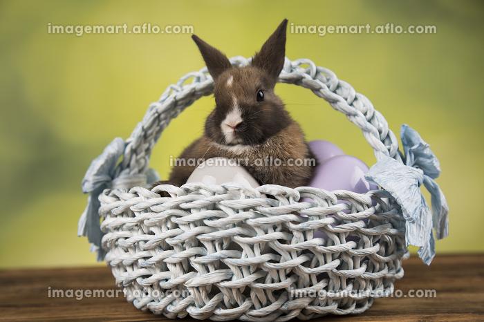 Cute little rabbit with basket backgroundの販売画像