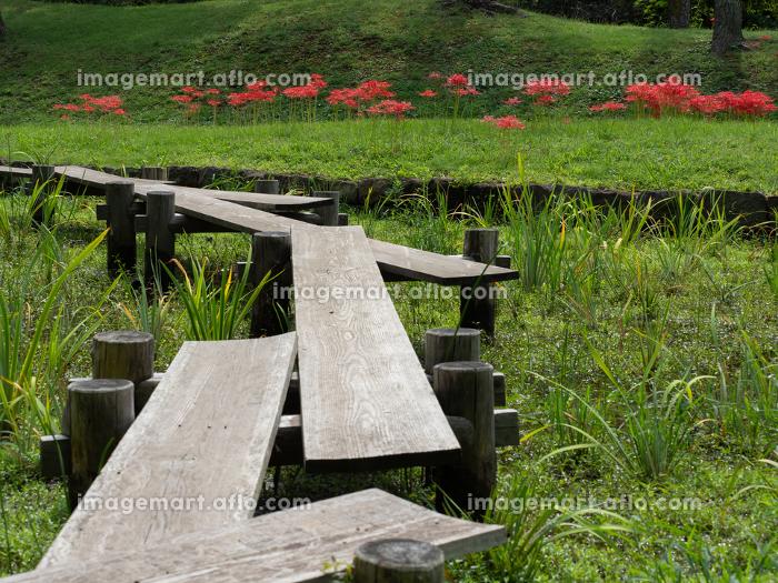 日本庭園の彼岸花 9月の販売画像