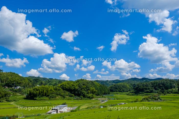 青空と農村の田園風景 京都府木津川市の販売画像