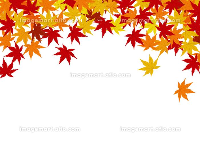 紅葉の背景素材の販売画像