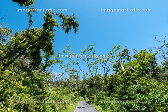 森の中の遊歩道 千葉県大房岬 5月の販売画像
