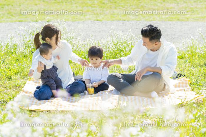 ピクニックを楽しむ親子の販売画像