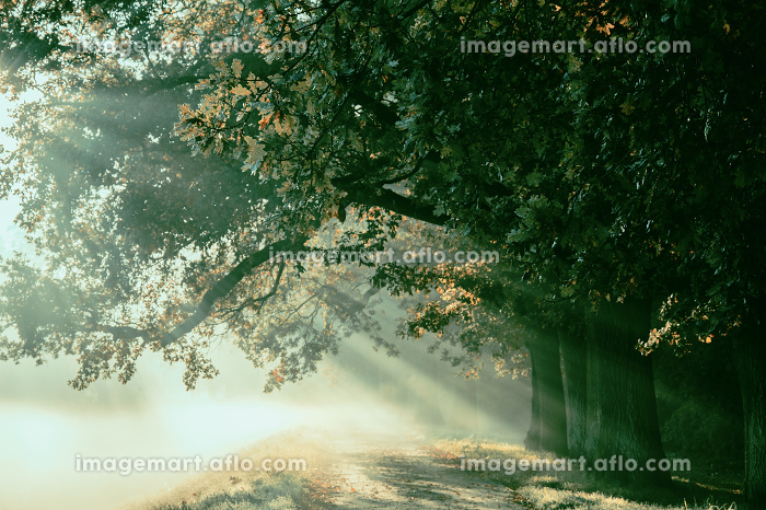 sunrise with rays on the background of a foggy mysterious path iの販売画像