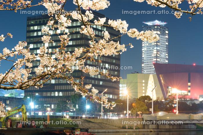 夜桜と小倉の街並みの販売画像