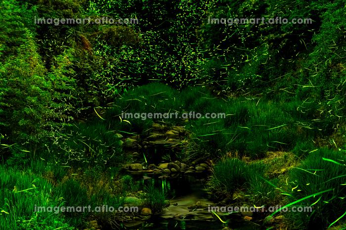 夏の夜渓流を飛び交うホタルの販売画像