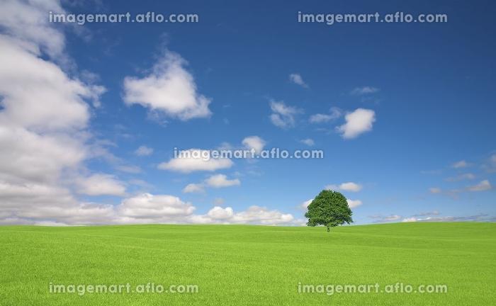 草原の一本木と雲の販売画像