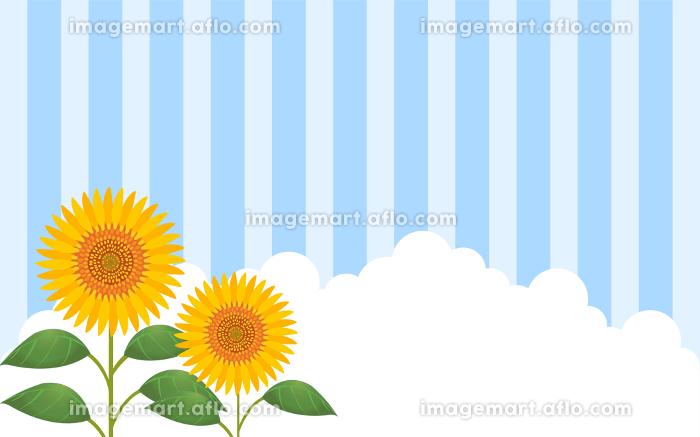 向日葵と入道雲とストライプ背景つきイラストの販売画像
