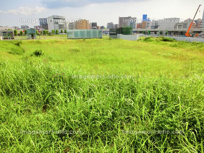 横浜みなとみらいの緑の空き地の販売画像