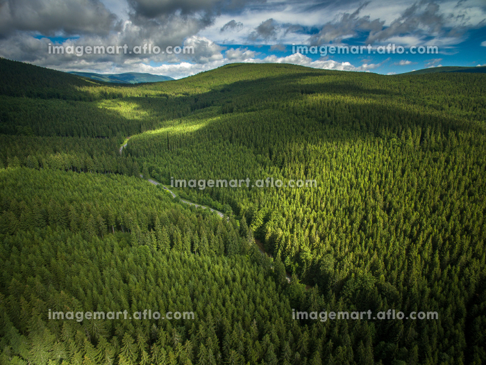 Aerial view of mountains covered with coniferous forestsの販売画像