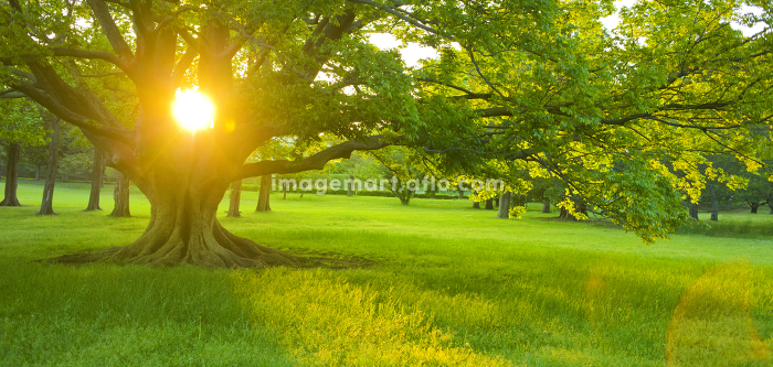 木 太陽の販売画像