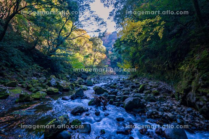 秋の天岩戸神社と爽やかな渓谷の販売画像