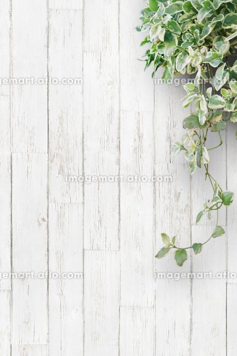 白い背景板と観葉植物・縦の販売画像