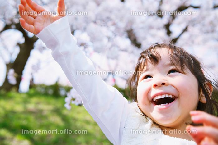 桜を見つめる日本人の女の子
