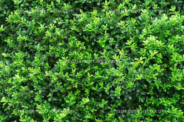 新緑・植栽・小さな葉っぱの集合の販売画像