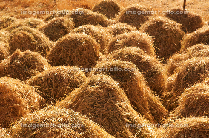 Hay stacksの販売画像
