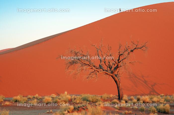 南部アフリカ 砂丘 目的地の販売画像