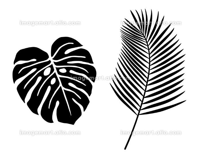 熱帯植物の葉 イラストアイコンセットの販売画像