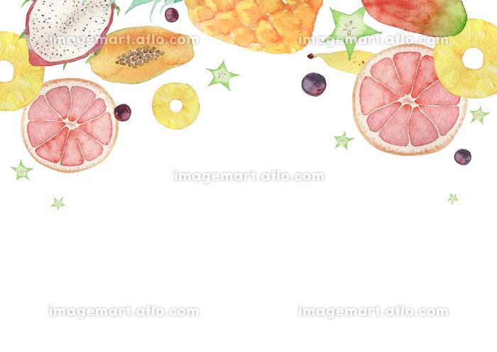 夏 背景 フレーム トロピカルフルーツ 水彩 イラストの販売画像