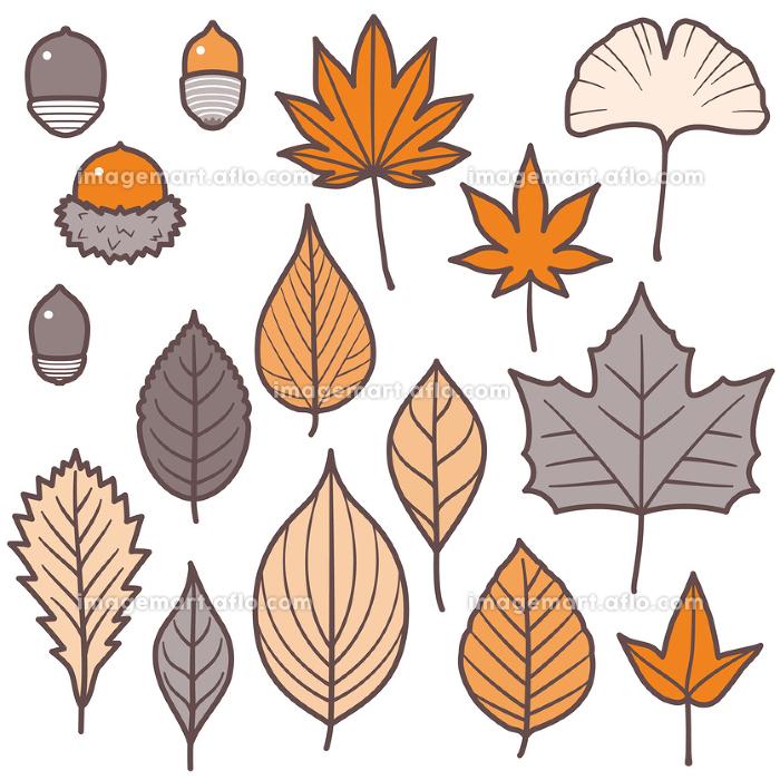 紅葉する葉っぱとどんぐりセット/2色の販売画像