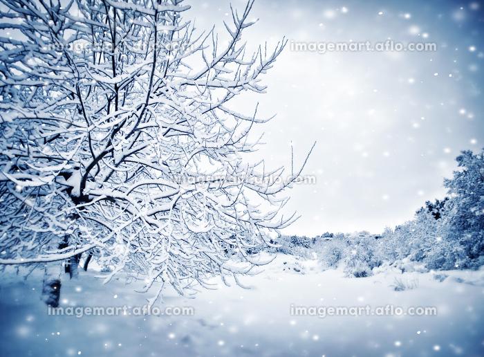 冬 格好いい 天気の販売画像