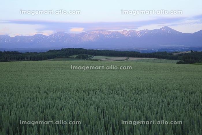 麦畑と夕焼けの十勝連山