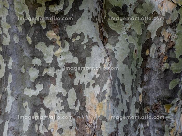 樹皮 迷彩 1610の販売画像