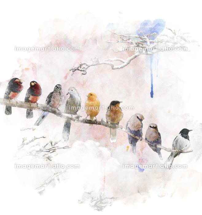 動物 鳥 絵画の販売画像