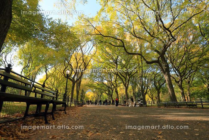 紅葉のセントラルパーク モール ニューヨーク アメリカ合衆国の販売画像