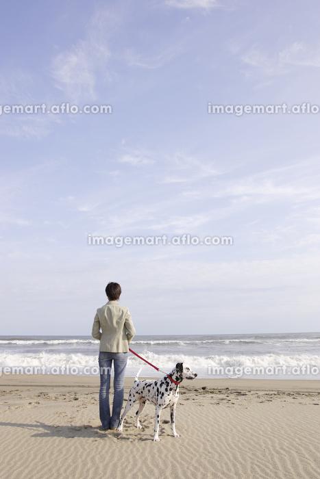 愛犬のダルメシアンと砂浜を散歩する若い女性
