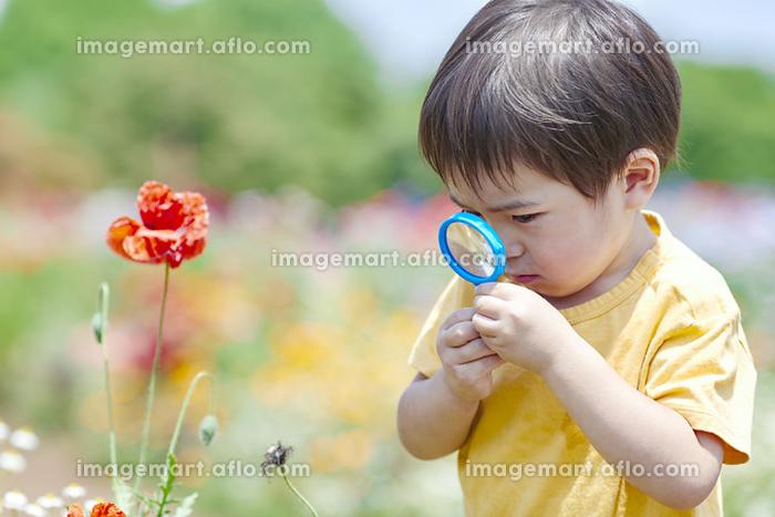 虫眼鏡で花を観察する日本人の男の子