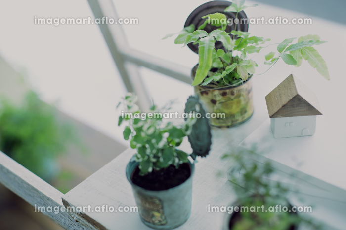 インドアグリーンとDIYの木の棚のイメージ写真の販売画像