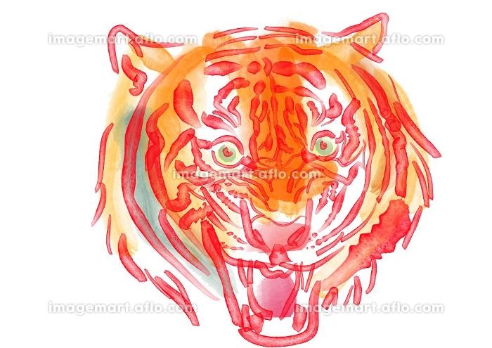 トラの吠える顔の水彩画の販売画像