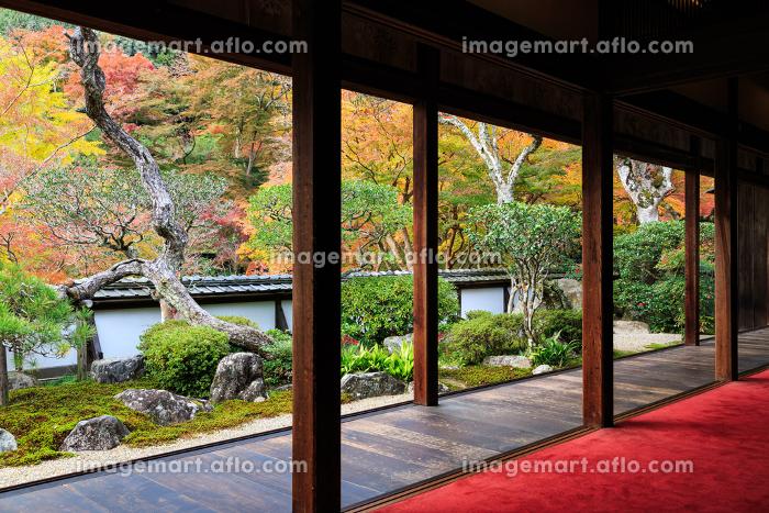 正暦寺 (2012/11/20撮影)の販売画像
