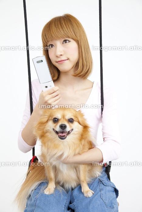 ブランコに乗るチワワと笑顔の女性の販売画像