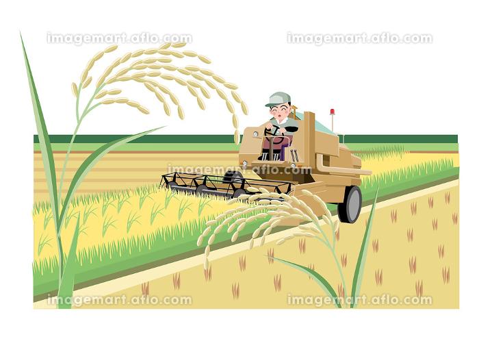 トラクターに乗って稲刈りをする男性