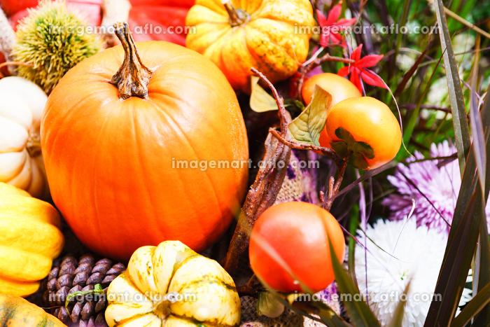 【秋イメージ】ハロウィーンのカボチャの販売画像
