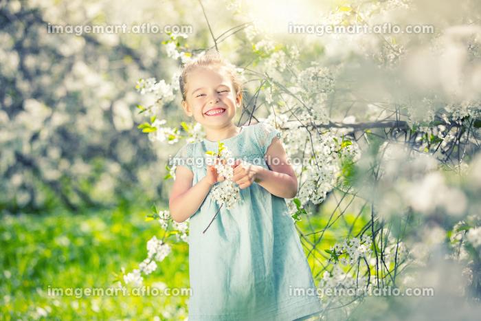 Happy little girl in cherry blossom gardenの販売画像
