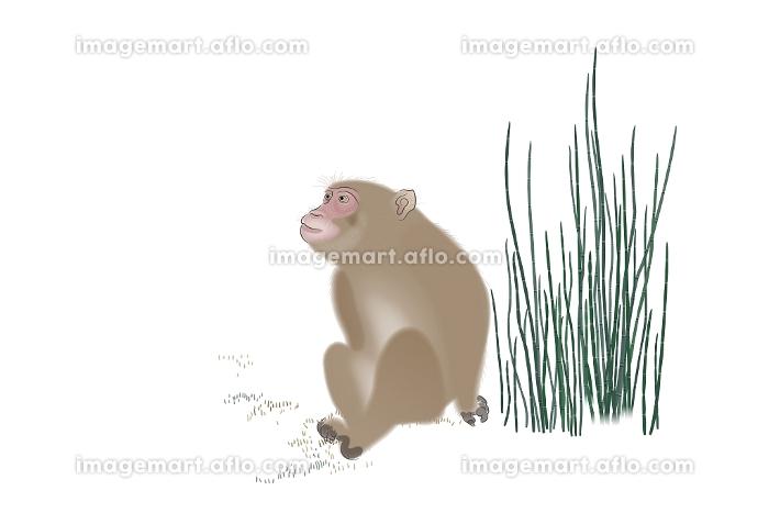 サル イラストの販売画像
