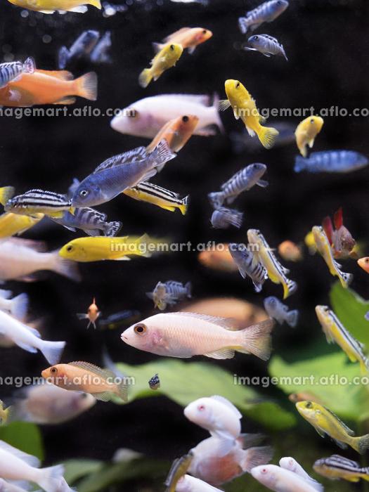 熱帯魚の水槽の販売画像