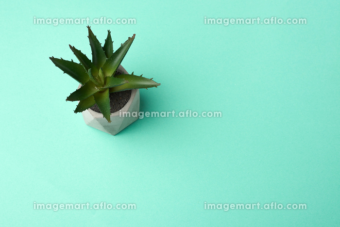 ceramic pot with growing aloe on a green background, top viewの販売画像