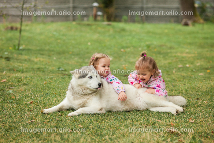 The two little baby girls playing with dog against green grassの販売画像