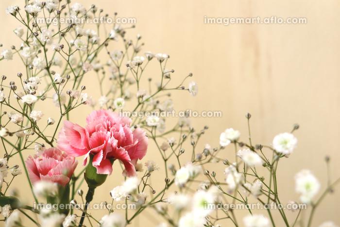 壁の前のカーネーションとカスミソウの花束 2の販売画像