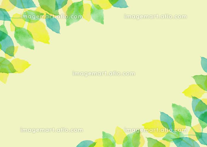 水彩で描いた新緑の背景フレームの販売画像