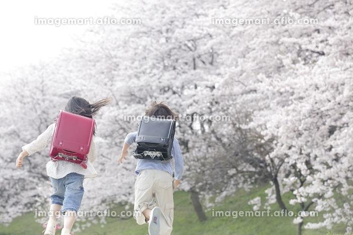 桜並木を走る小学生の後ろ姿