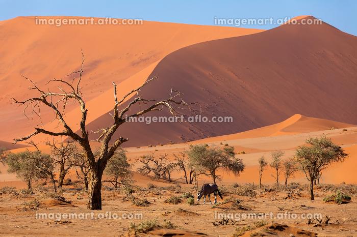Dead Vlei landscape in Sossusvlei, Namibia Africaの販売画像